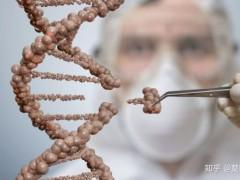中科院博士:基因敲除技术不复杂 分子生物学实验室都可做